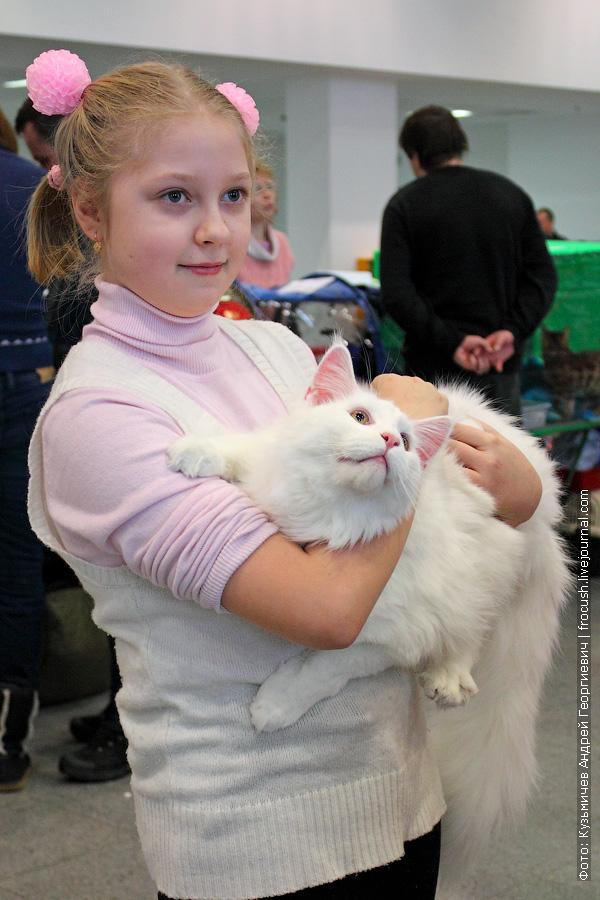 Мейн-кун Дольф на руках девочки