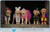 Мистическая пятерка / Spooky Buddies (2011) DVD5 + HDRip