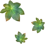 MRD_Toe-Tally-Faerie-leaves.png