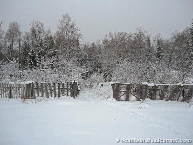 Зимний лес. Окрестности Фрязино.