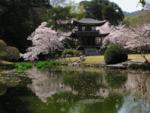 Япония   весна  3.png