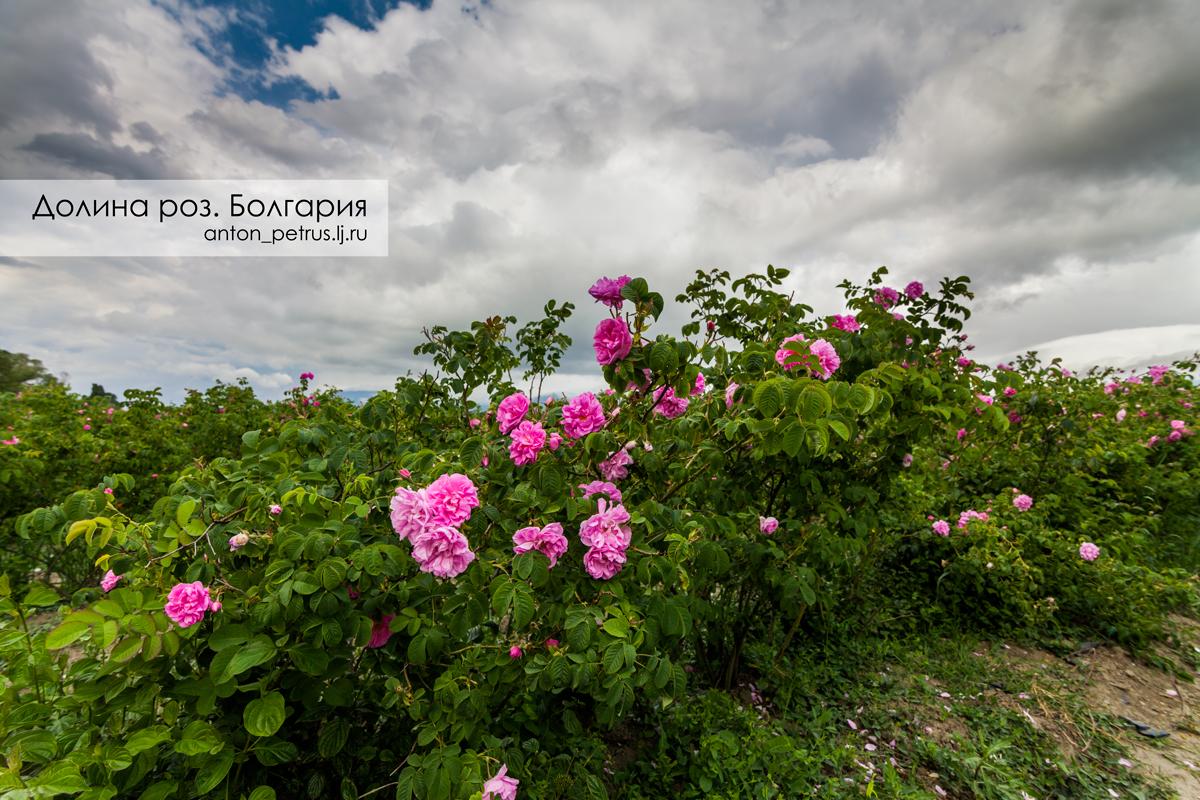 Долина роз. Болгария