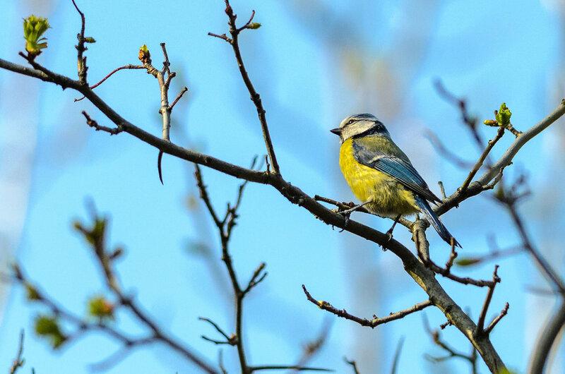 Птицы в Тимирязевском парке весной