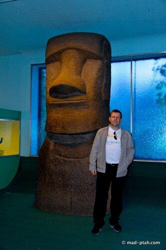 музей естественной истории, нью-йорк