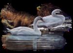 Птицы  разные  0_81ef8_1f0048f6_S