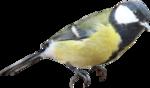 Птицы  разные  0_81efa_ad348a00_S