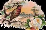 Птицы  разные  0_81eff_34a9f25f_S