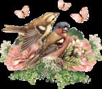 Птицы  разные  0_81f01_3d2ca4d2_S
