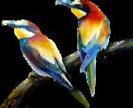 Птицы  разные  0_81f02_77703317_S
