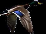 Птицы  разные  0_81f04_e6a7e37_S