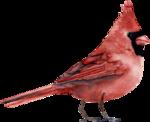 Птицы  разные  0_81f19_853d6e09_S