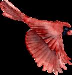 Птицы  разные  0_81f1e_5596ce60_S
