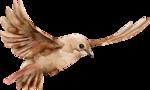 Птицы  разные  0_81f1f_469aa11b_S