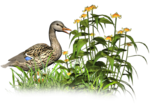 Птицы  разные  0_81f21_ef952bcc_S