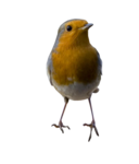 Птицы  разные  0_81f3a_837e5615_S