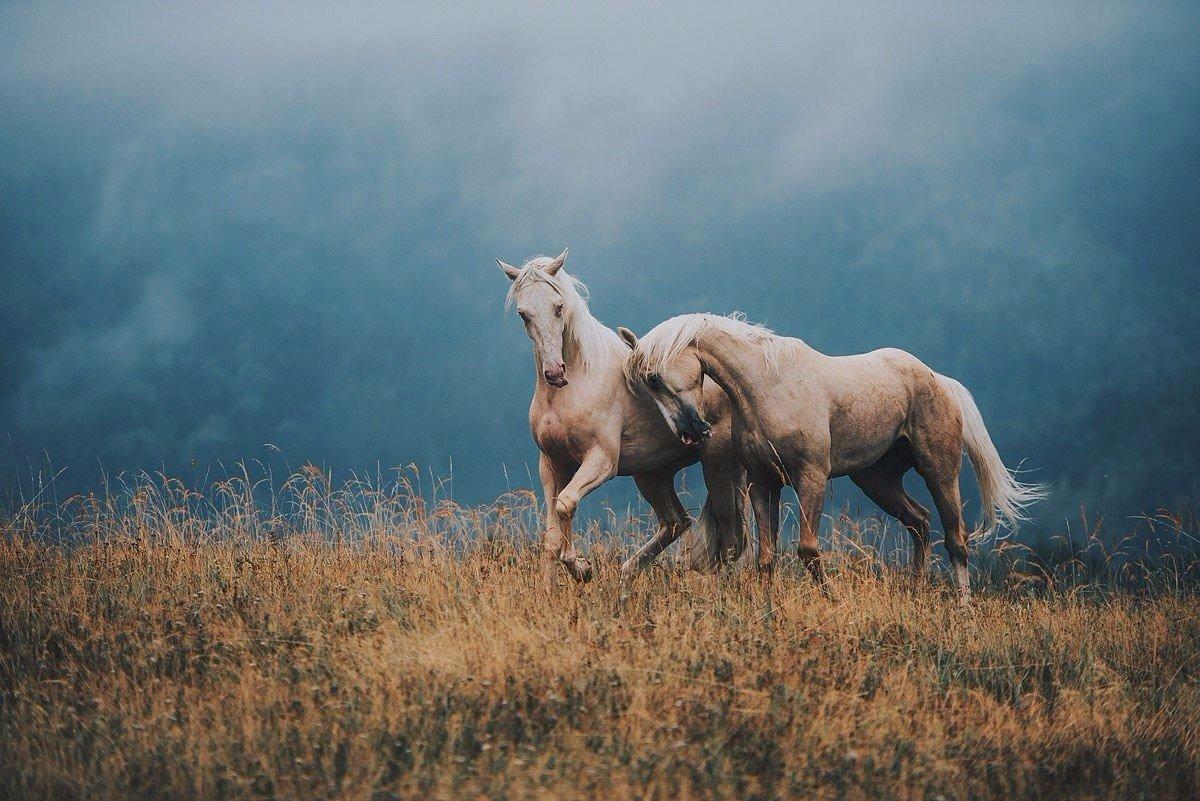 Что может быть прекраснее лошадей?