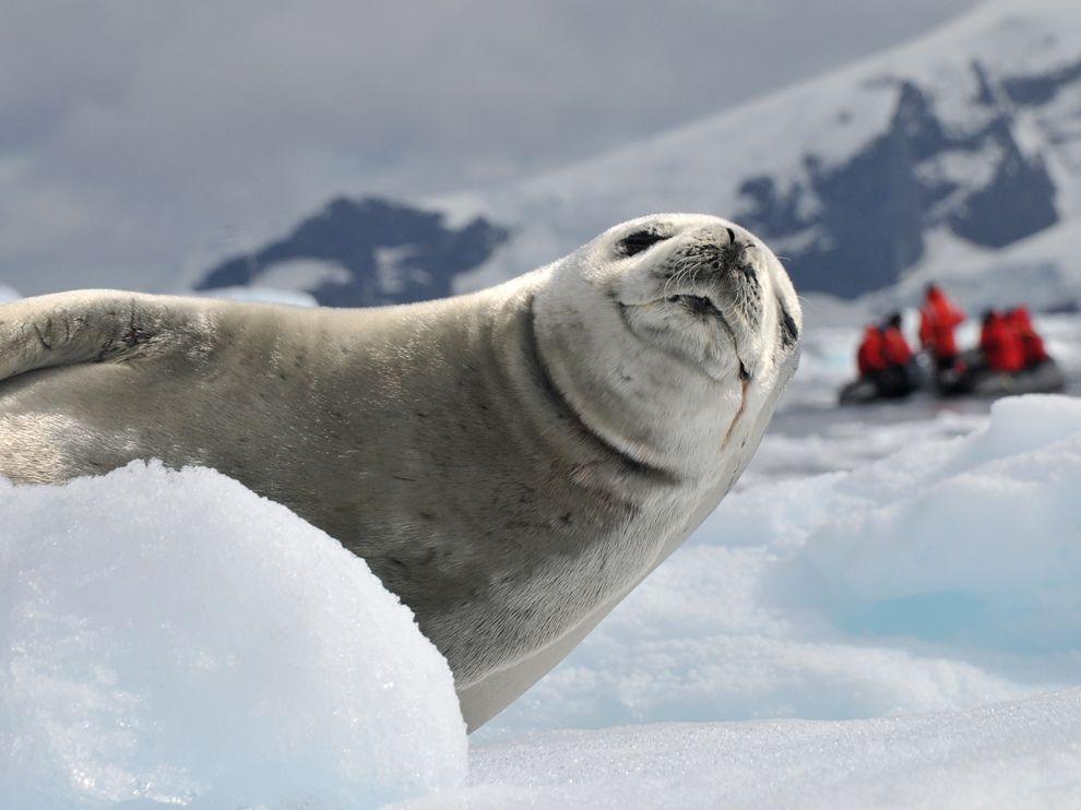 Лучшие фотографии за февраль от National Geographic(2012)