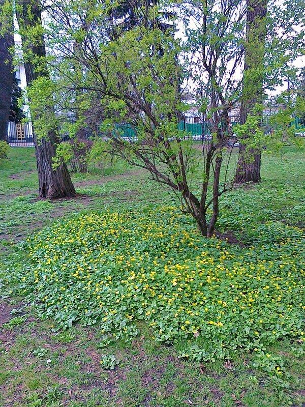 Весенние цветы под кустом