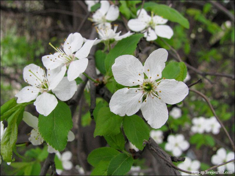Весна Запорожье