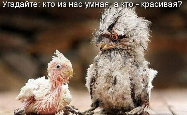 http://img-fotki.yandex.ru/get/6101/53256023.15/0_7dbb9_6c8e3eee_XL.jpg