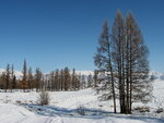 Пейзаж с лиственницами