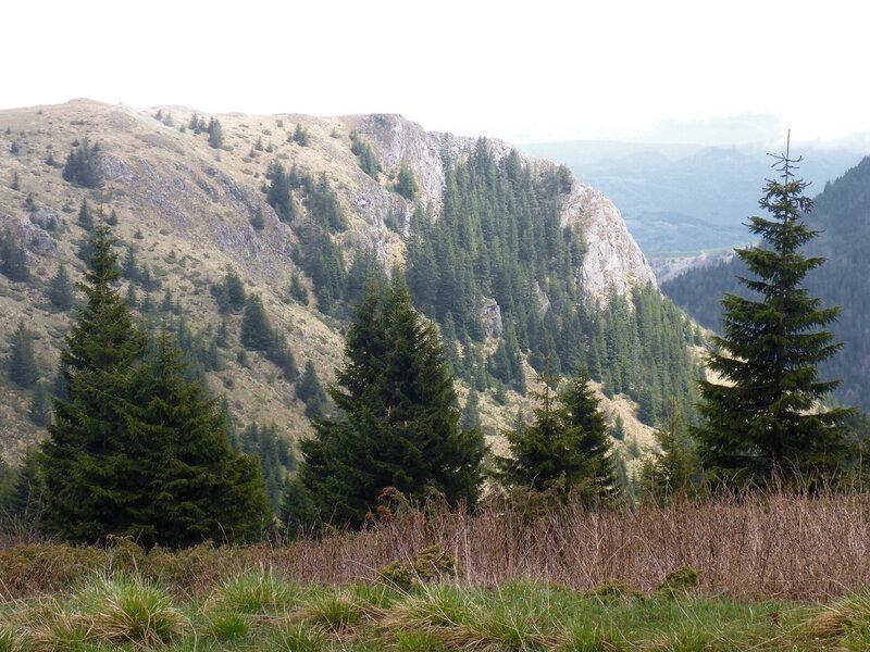 пейзаж в горах в копаонике