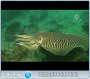 Подводные создания / Underwater Creatures (2011) DVB