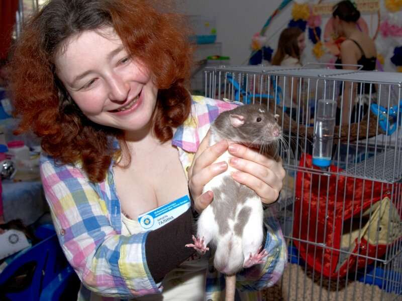 Уход за крысой в домашних условиях дамбо 292