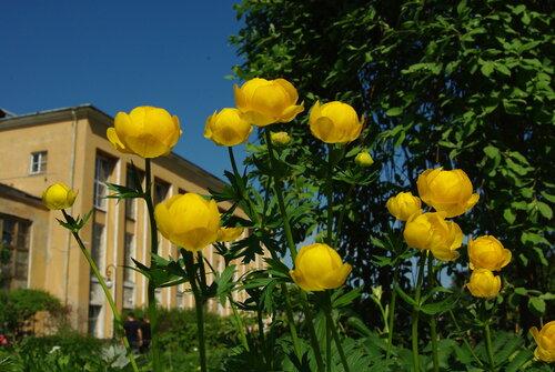 цветы ботанического сада