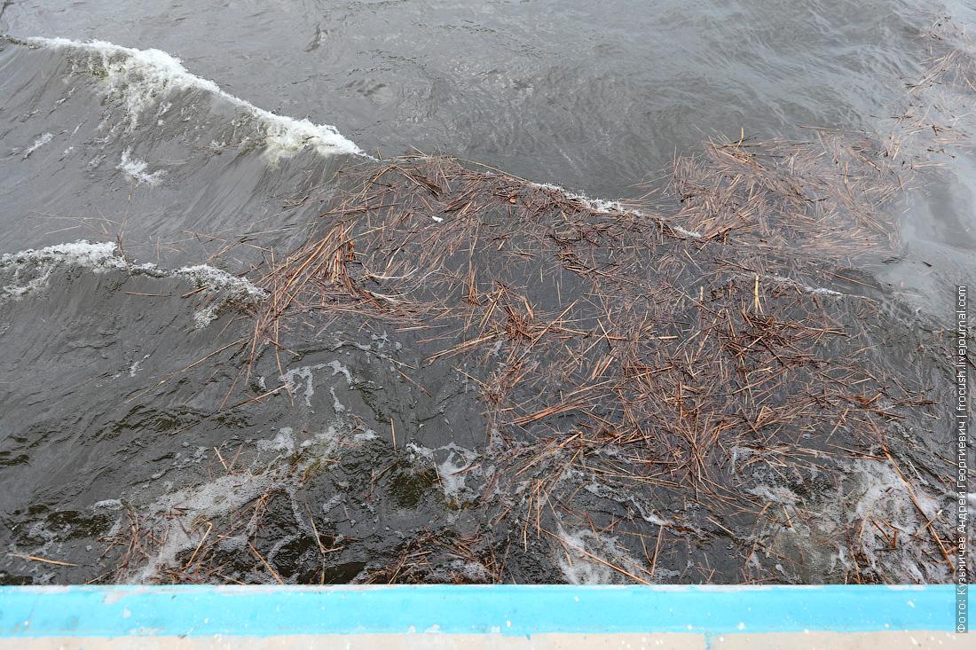 за бортом Волгоградское водохранилище с прошлогодней травой