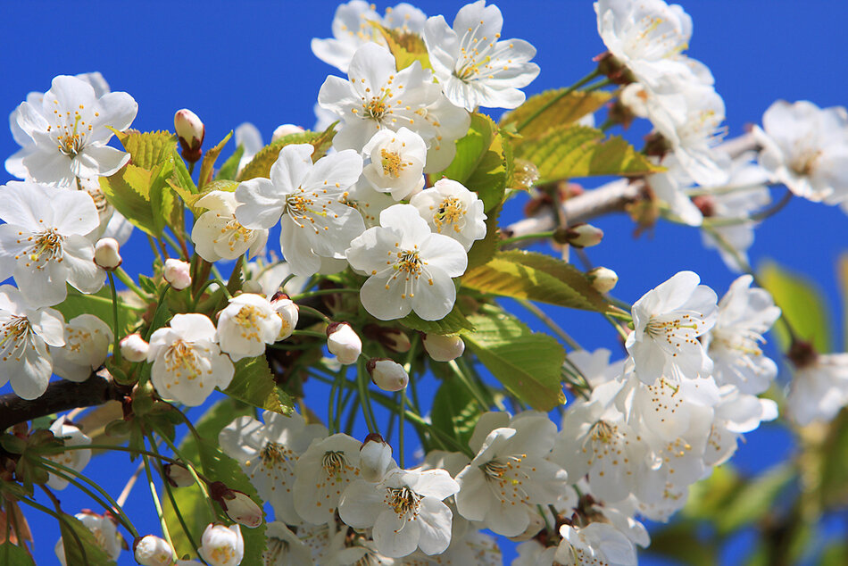 Весна, ты так прекрасна.  Душа поет от счастья.  На сердце нынче праздник.