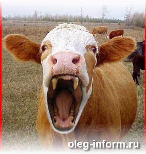 скачать игру бешеная корова