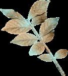 feli_syd_foliage7.png