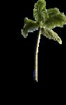 NLD I Sea You Palm tree.png