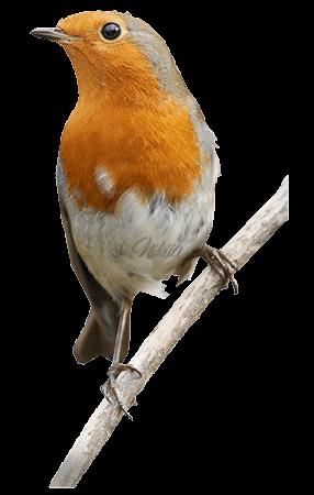 Ptice..... 0_dac1e_bc1dc24d_L