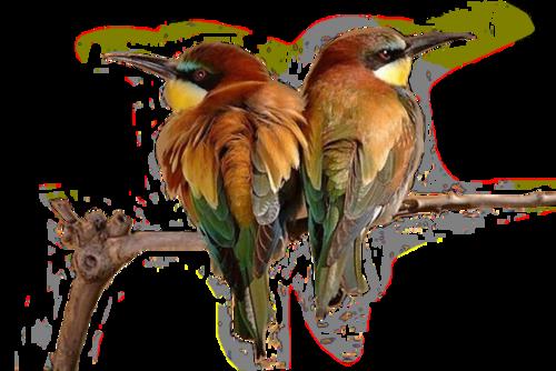 Ptice..... 0_dac29_94e8eb6_L
