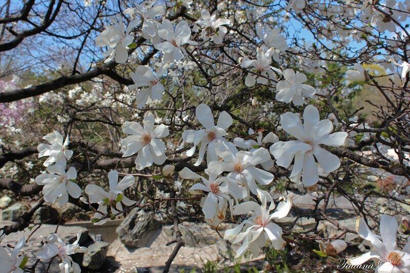 Весна чарует дивным ароматом...