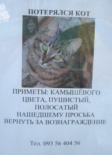 пропал кот, Одесса