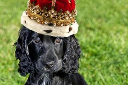 Королевский щенок в Твиттере