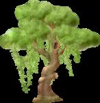 NLD Tree b.png