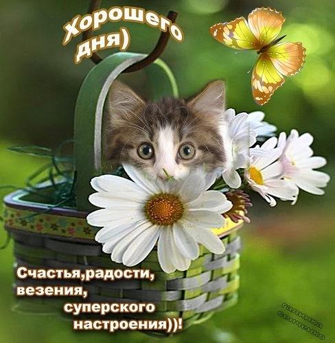 Хорошего дня! Счастья, радости, везенья, суперского настроения!