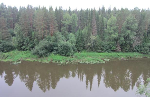 Отражение леса вводе