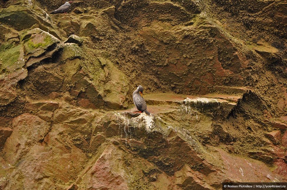 0 16174e e832f7ea orig Национальный парк Паракас и острова Бальестас в Перу