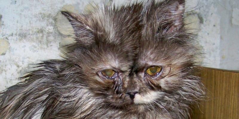 Плохие симптомы у котят кошка кот котенок