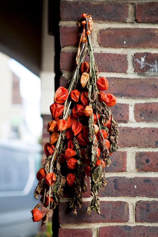 orange flowers of Physalis