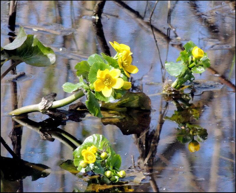 Биргильда 0663 Цветы.JPG