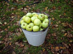 как снимать яблоки