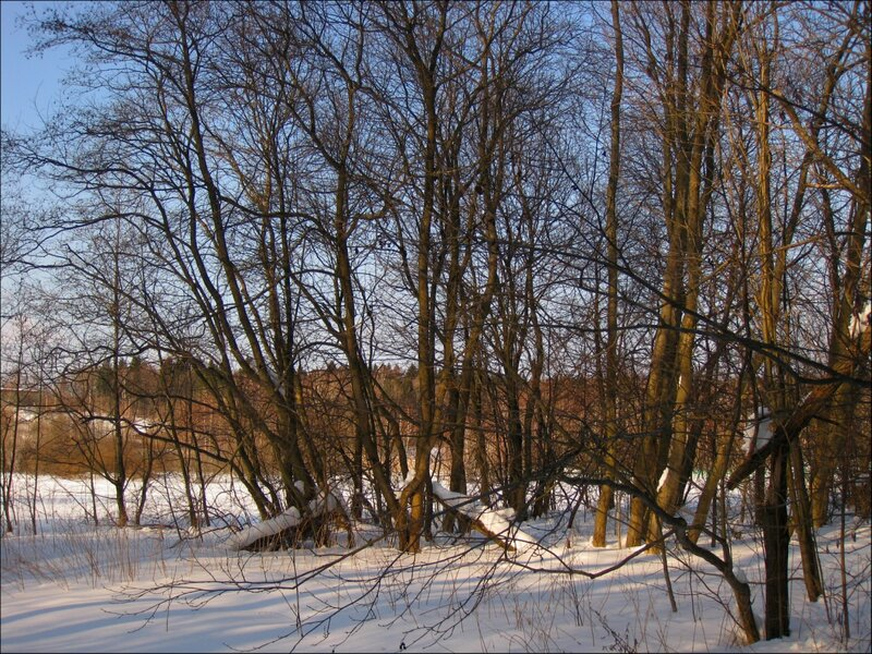 Деревья на опушке