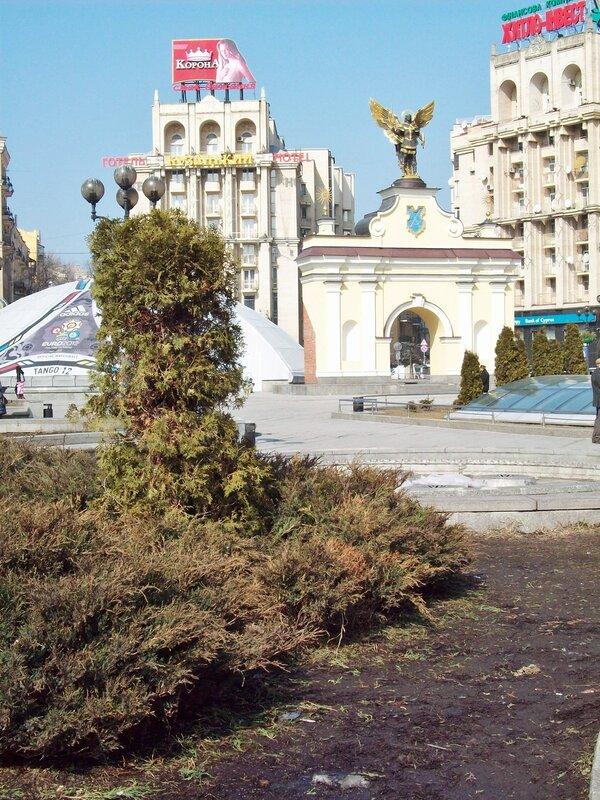Пихта на Майдане Незалежности