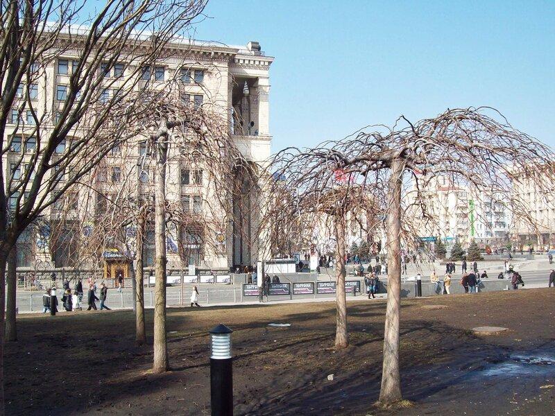 Деревья Майдана Незалежности